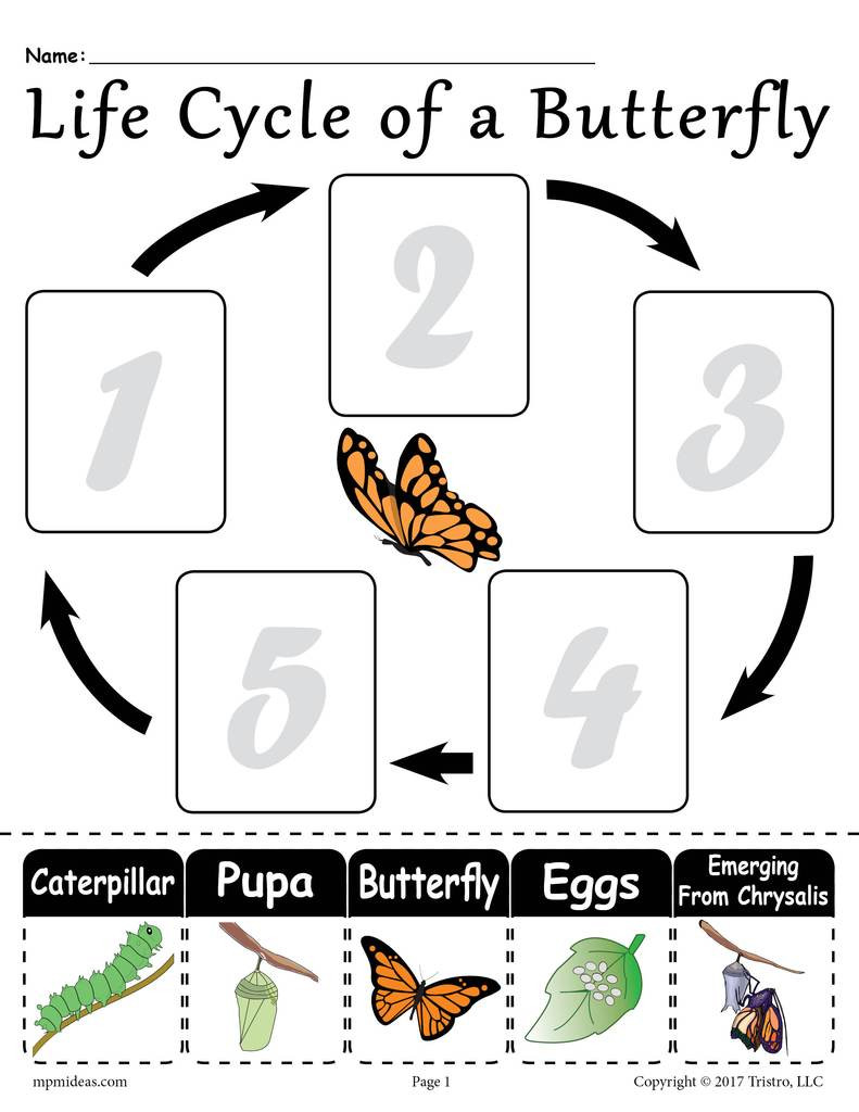 "Butterfly Life Cycle Worksheet 2 ""life Cycle Of A butterfly"" Printable Worksheet"