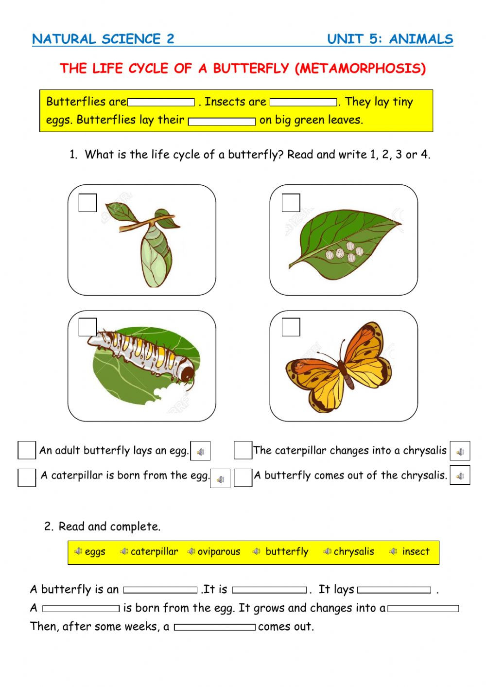 Butterfly Life Cycle Worksheet 2 the Life Cycle Of A butterfly Interactive Worksheet