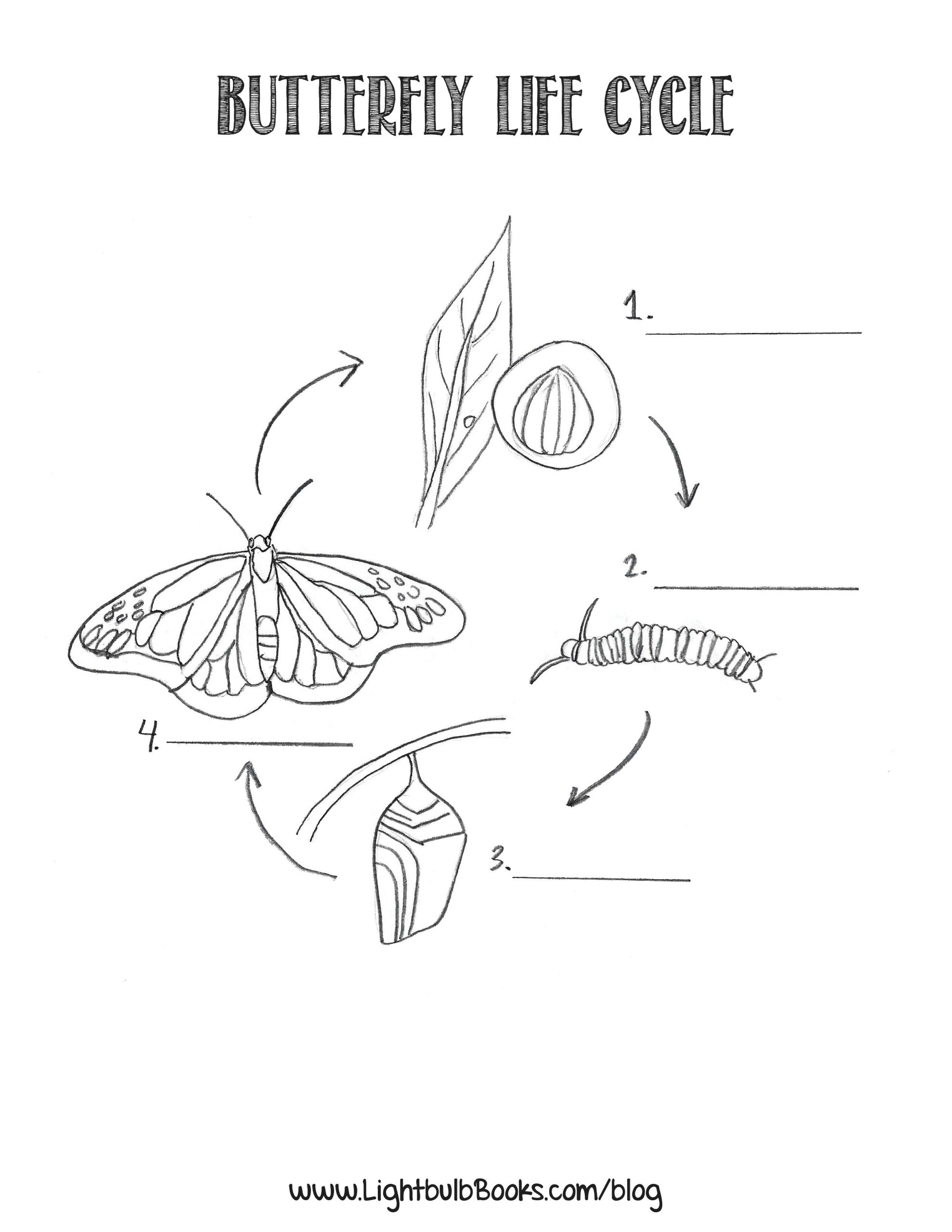 Butterfly Life Cycle Worksheet 2 the Life Cycle Of A butterfly
