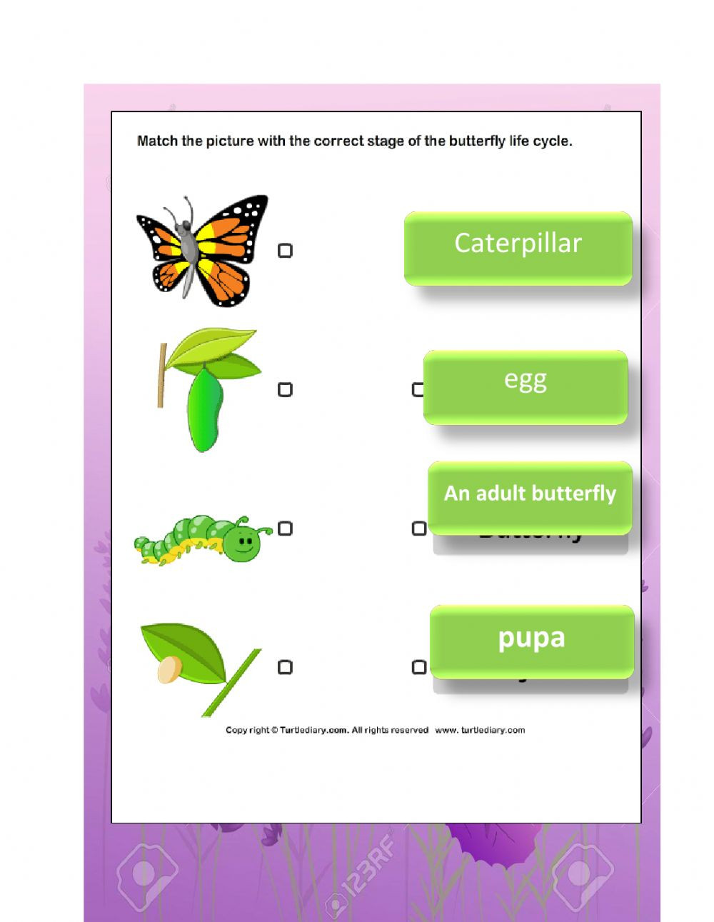 Butterfly Life Cycle Worksheet 2 the Life Cycle Of butterfly Interactive Worksheet