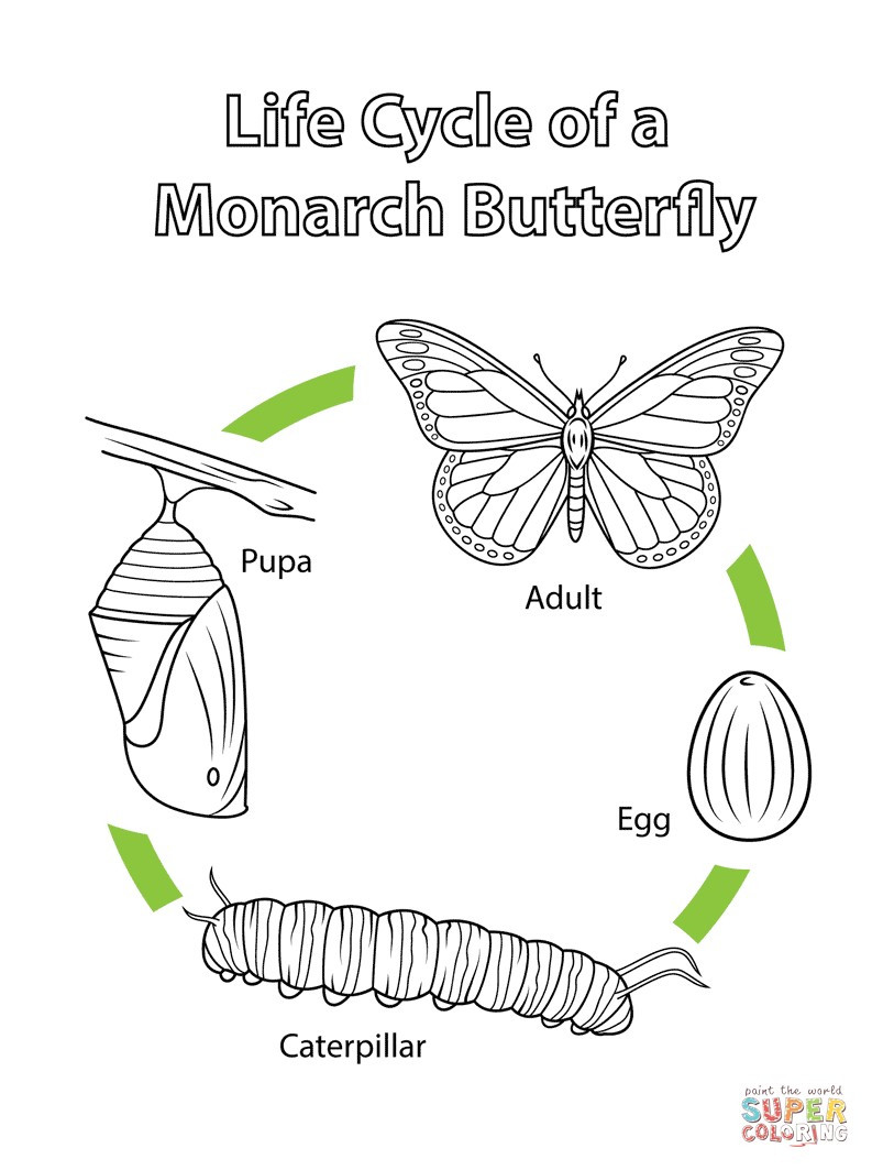 Butterfly Life Cycle Worksheet 2 Unique Monarch butterfly Life Cycle Worksheet