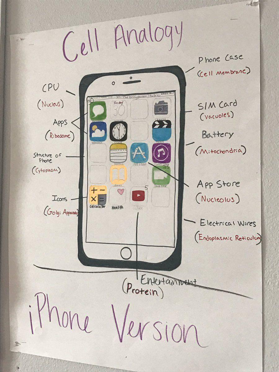 Cell City Analogy Worksheet Pin On Printable Education Worksheet Templates