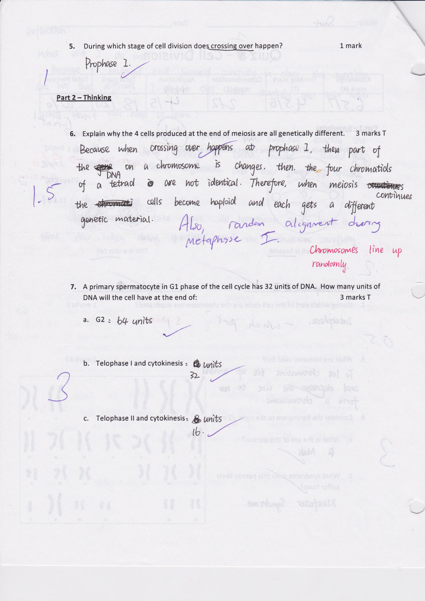 Cell Cycle Worksheet Answers Section 1 Reinforcement Cell Division and Mitosis Worksheet