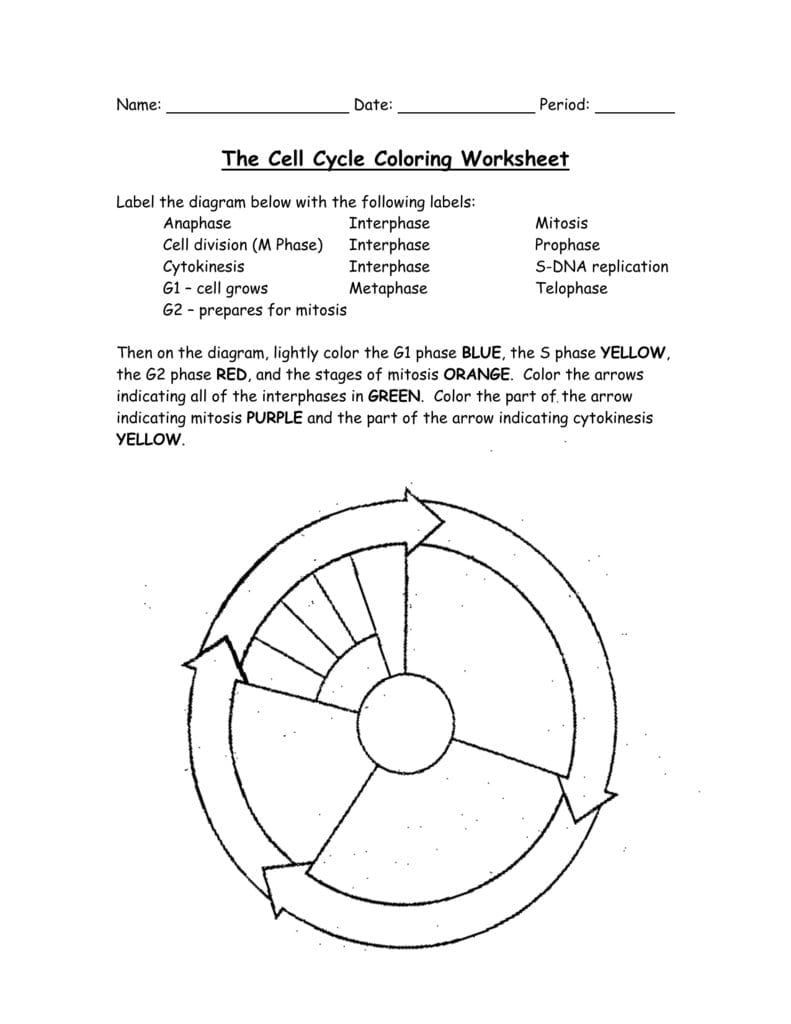 Cell Cycle Worksheet Answers the Cell Cycle Coloring Worksheet In 2020