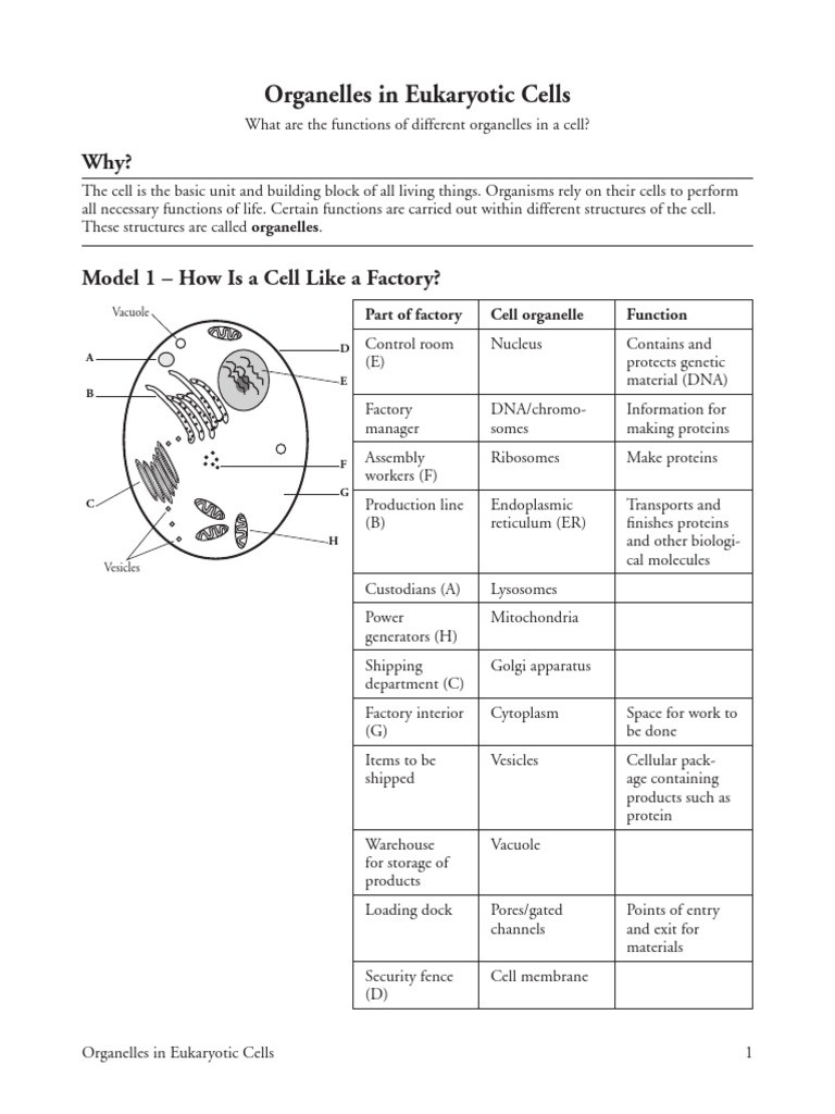 Cells and their organelles Worksheet 8 organelles In Eukaryote Cells S Eukaryotes