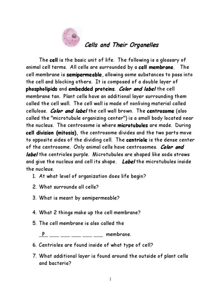 Cells and their organelles Worksheet Cells and organelles Endoplasmic Reticulum