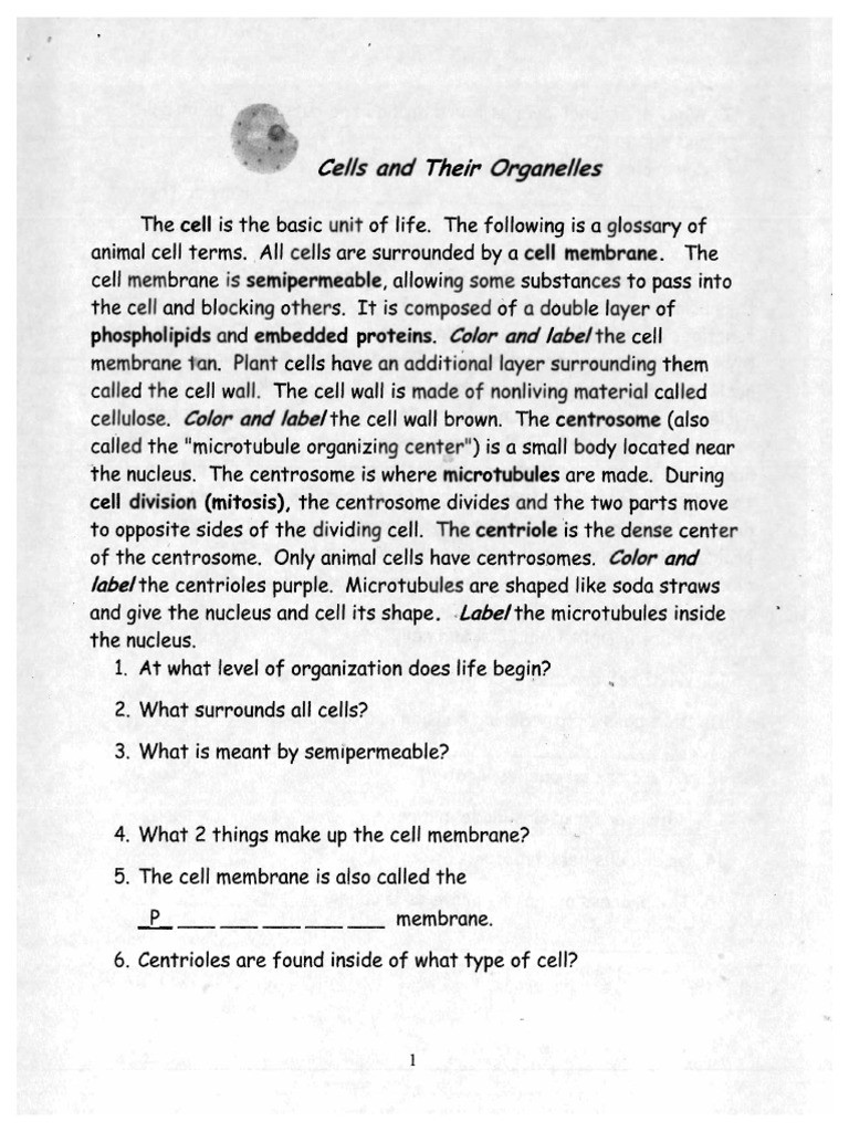 Cells and their organelles Worksheet Cells and their organelles Packet