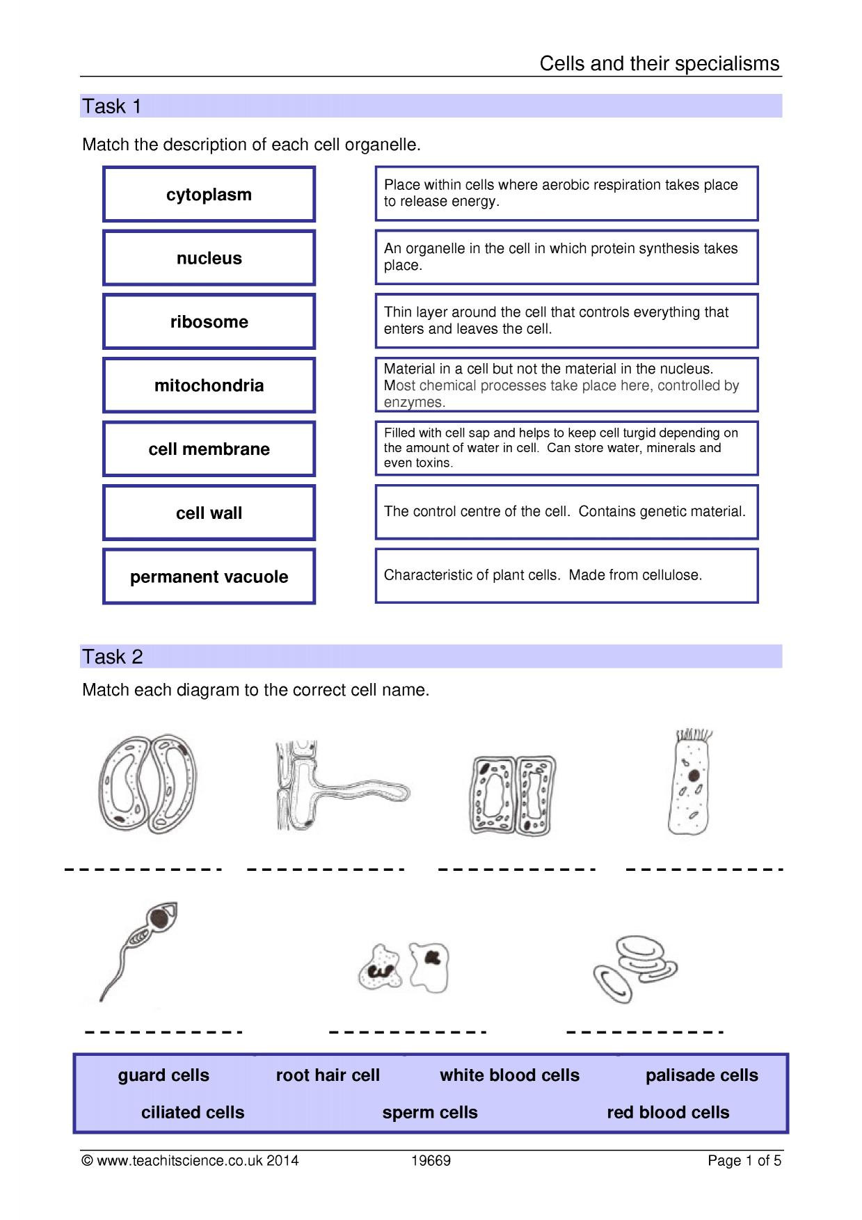 Cells and their organelles Worksheet Cells and their Specialisms