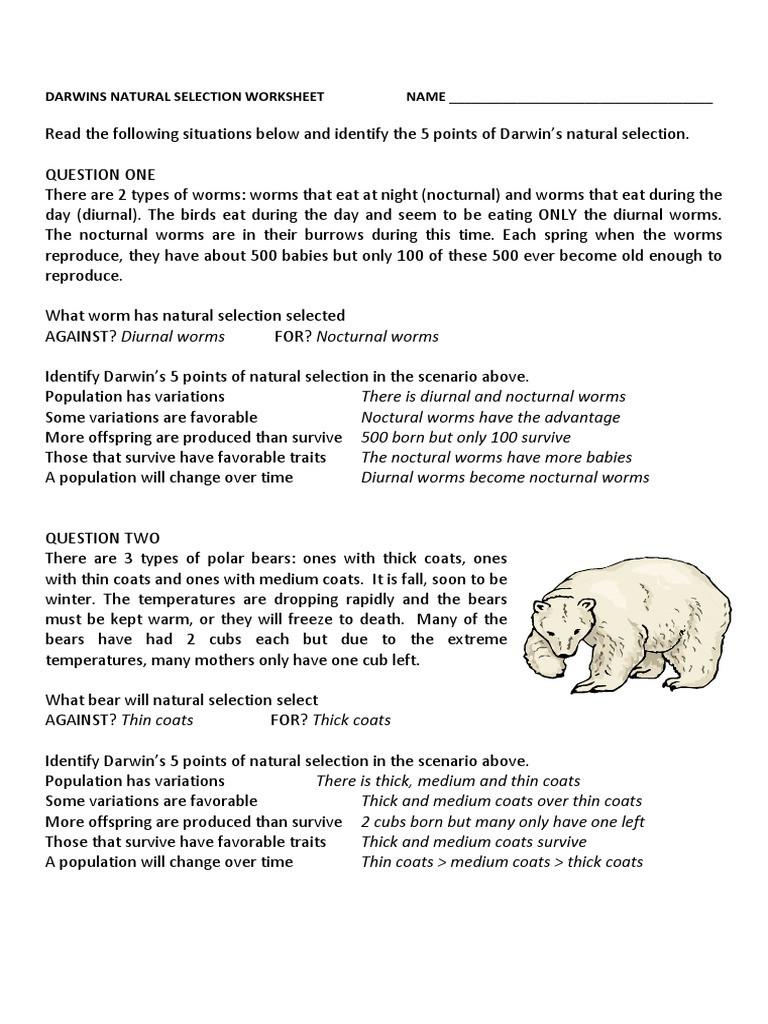 Darwin Natural Selection Worksheet Darwins Natural Selection Worksheet Answers
