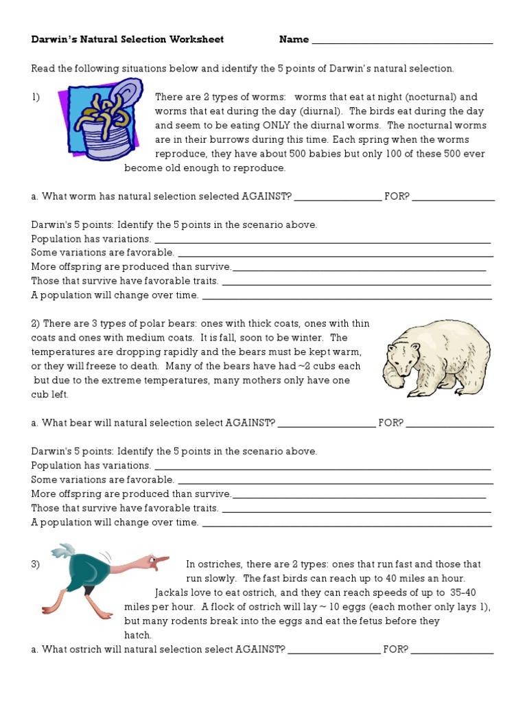 Darwin Natural Selection Worksheet Darwins Natural Selection Worksheet Natural Selection