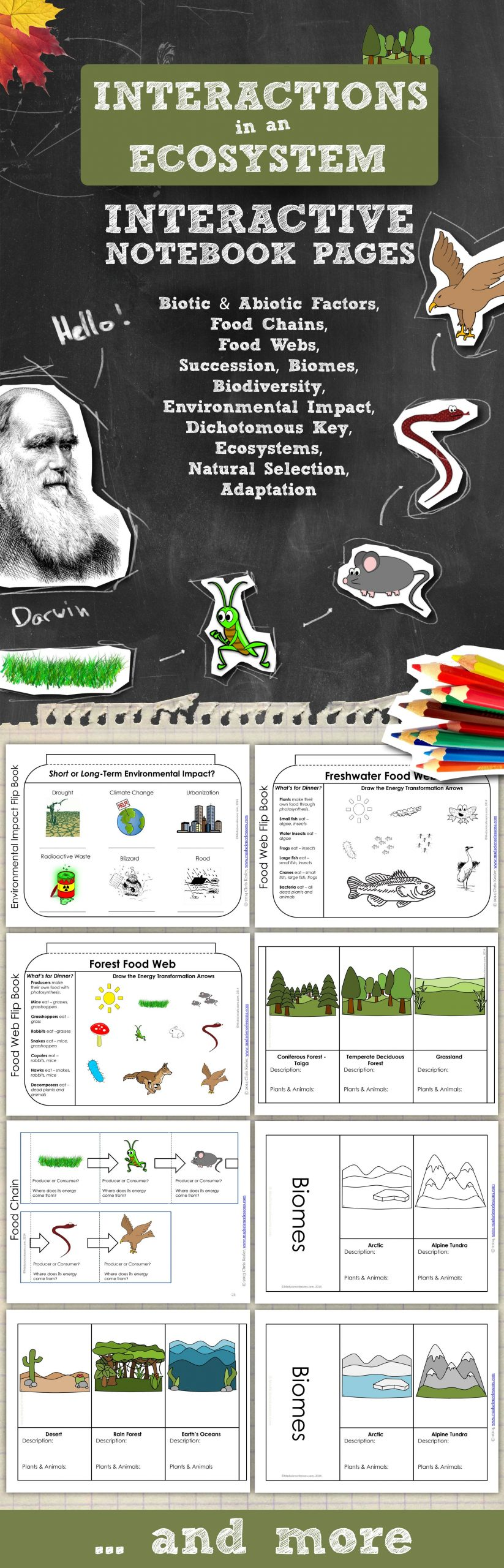 Darwin039s Natural Selection Worksheet Answers Ecosystems Interactive Notebook Pages