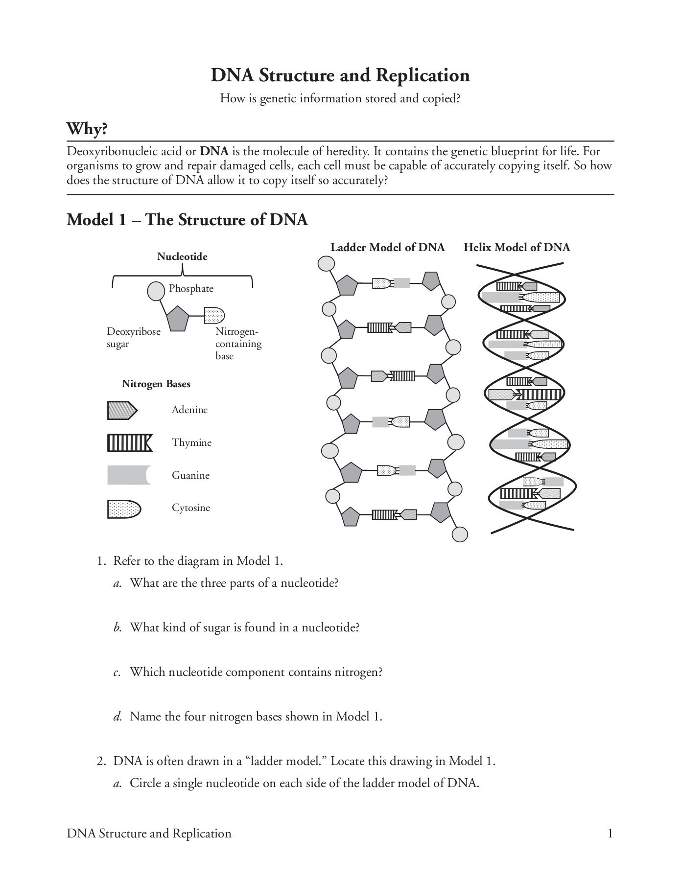 Dna Structure and Replication Worksheet Dna Structure and Replication Pages 1 5 Text Version