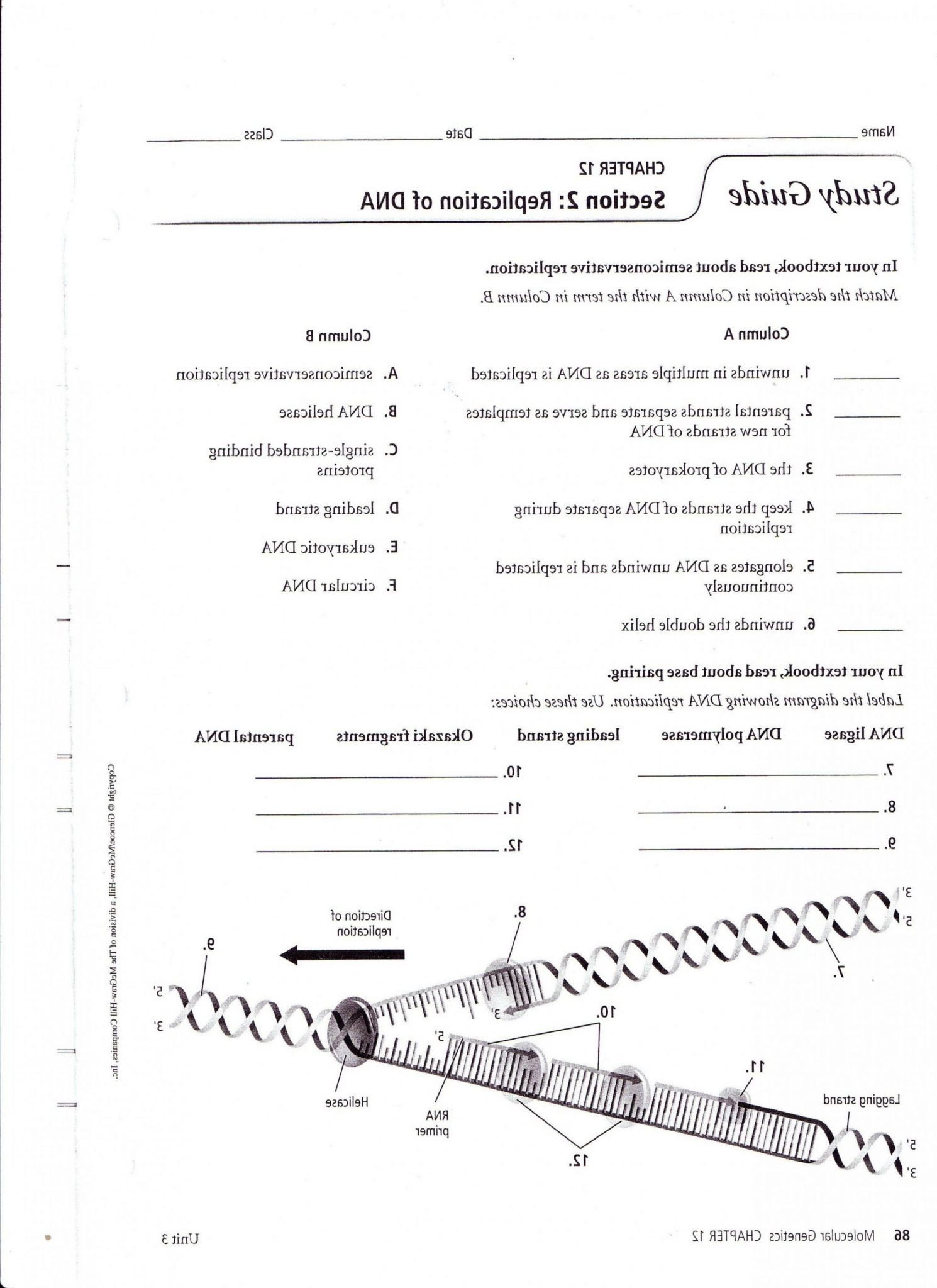 Dna Structure and Replication Worksheet Dna Worksheet Kids