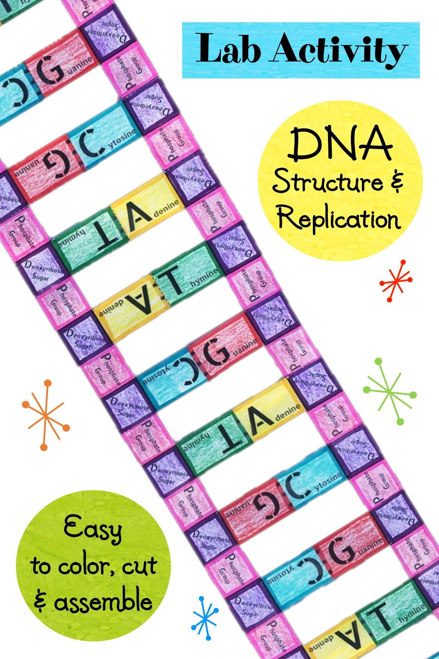 Dna Structure and Replication Worksheet Lab Activity Dna Structure and Replication
