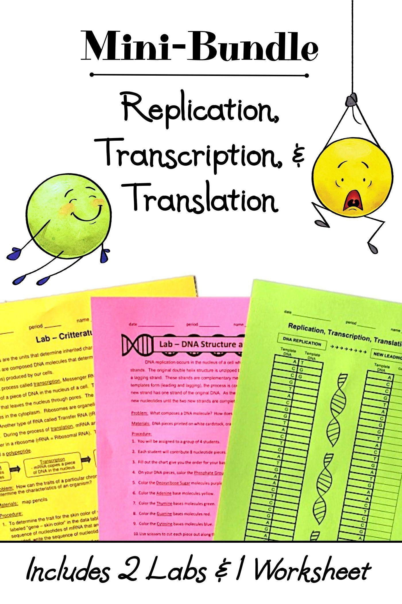 Dna Transcription and Translation Worksheet Dna Transcription and Translation Worksheet Replication