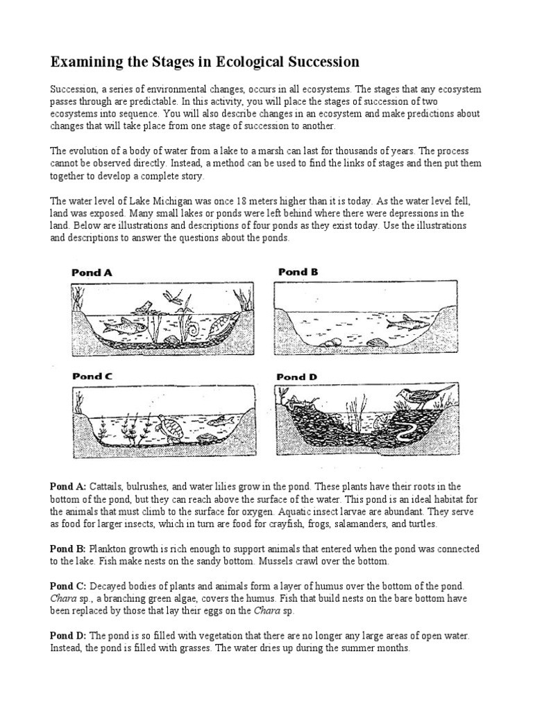 Ecological Succession Worksheet Answers Examining the Stages In Ecological Succession Full Page