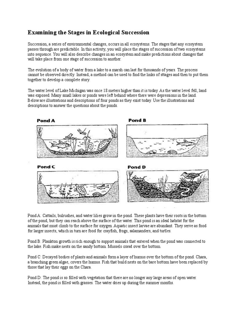 Ecological Succession Worksheet Answers Examining the Stages In Ecological Succession Pond