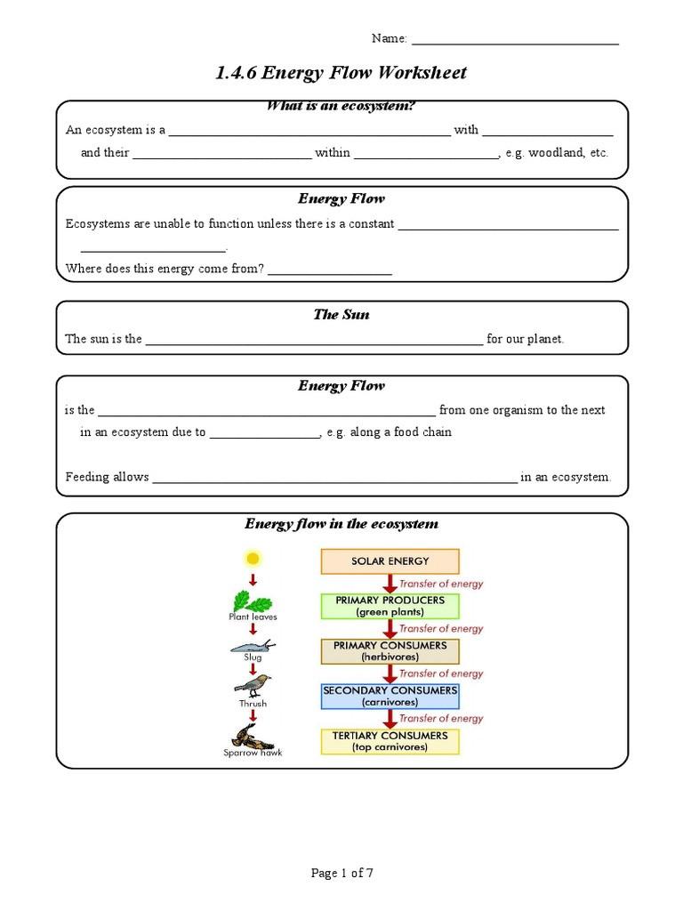 Ecology Review Worksheet 1 1 4 6 Energy Flow Worksheet Food Web