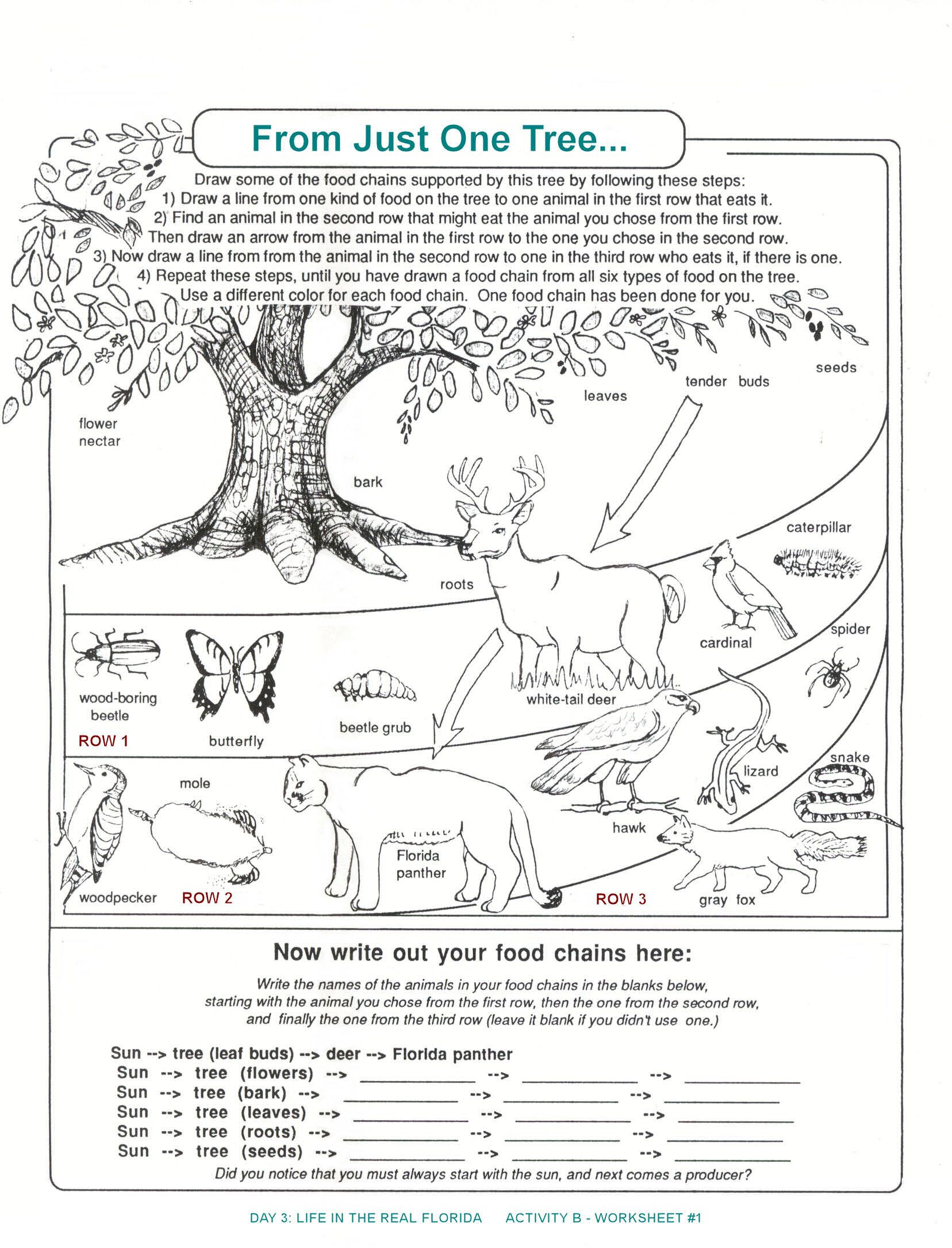 Ecology Review Worksheet 1 Florida Food Chain Worksheet From Just One Tree