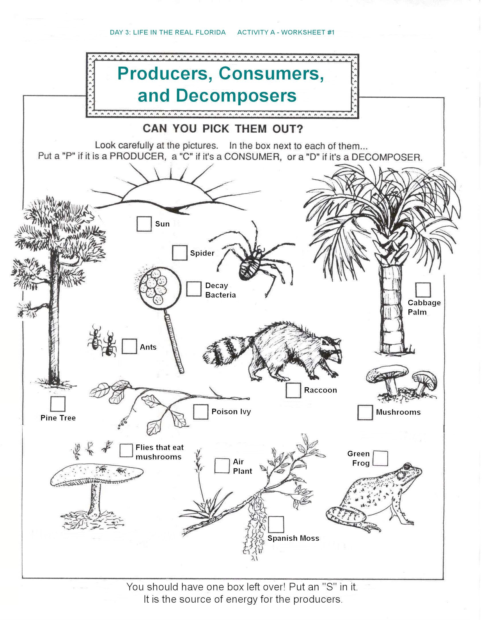 Ecology Review Worksheet 1 Hbold Station Station Documents Education