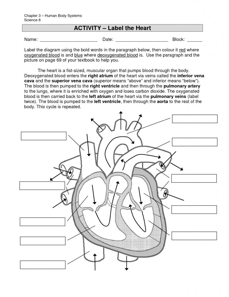 Free Body Diagram Worksheet Answers Simple Labeled Heart for Kids Blue and Red Diagram the