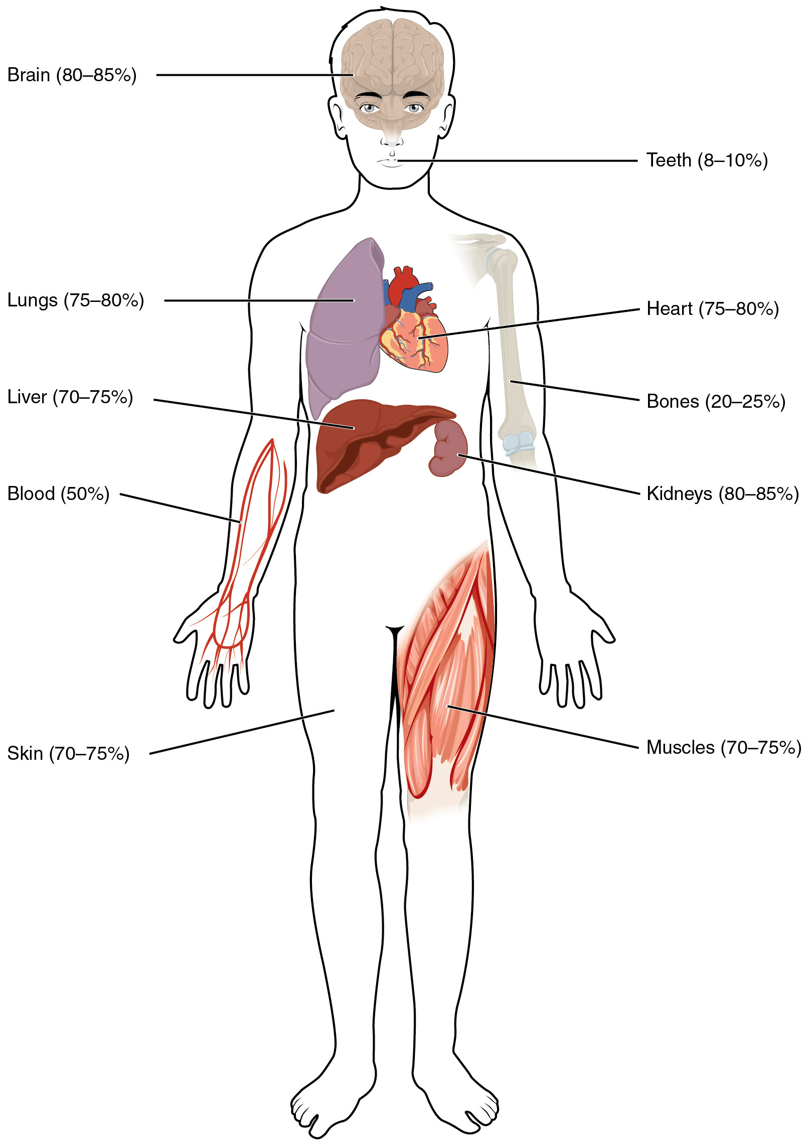 Inside the Living Body Worksheet 26 1 Body Fluids and Fluid Partments Anatomy and