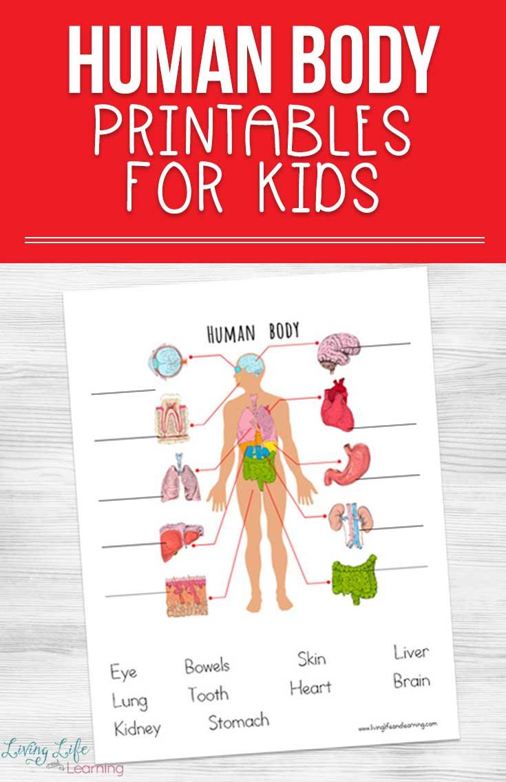 Inside the Living Body Worksheet Human Body Printables for Kids