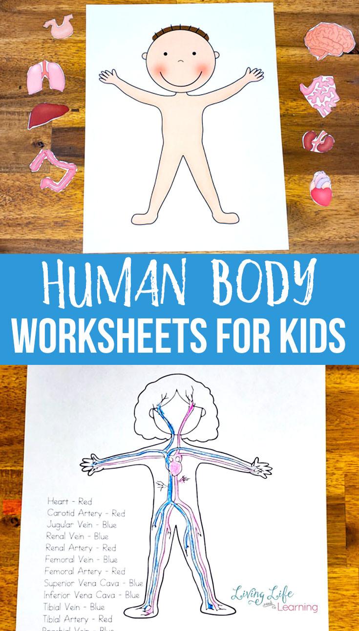 Inside the Living Body Worksheet Human Body Worksheets for Kids
