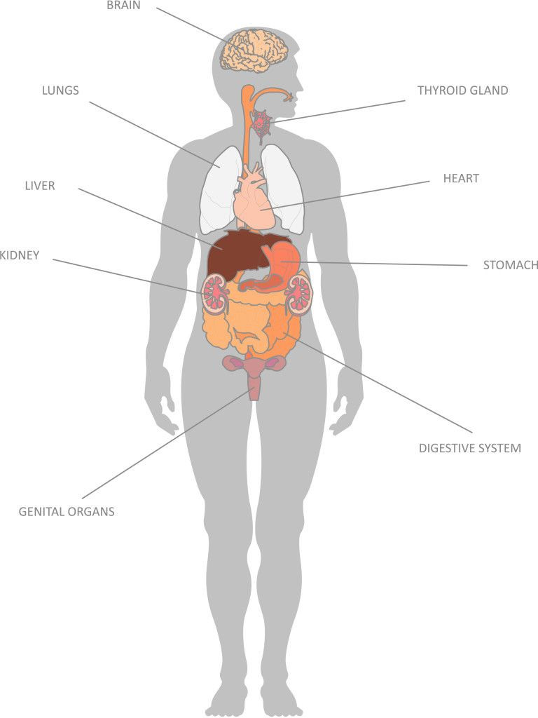 Inside the Living Body Worksheet Internal organs and their Functions