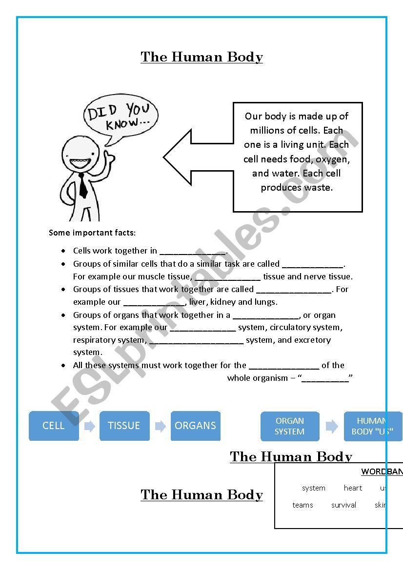 Inside the Living Body Worksheet the Human Body Esl Worksheet by Ahutchen