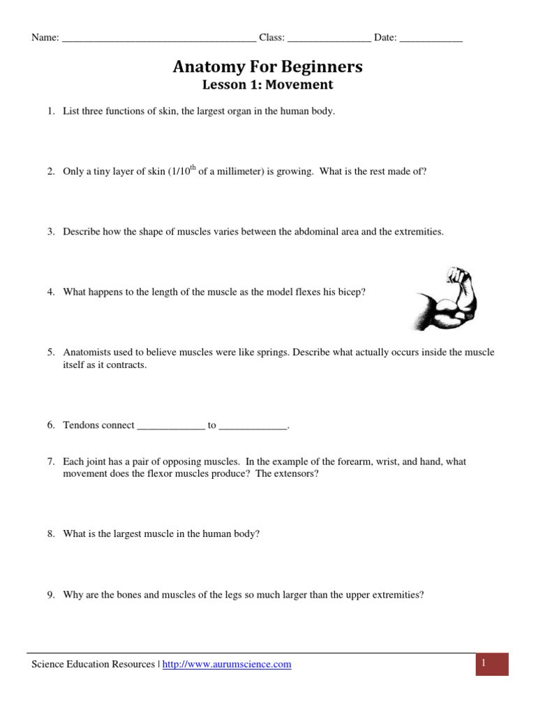 Joints and Movement Worksheet Anatomy for Beginners Movement Worksheet