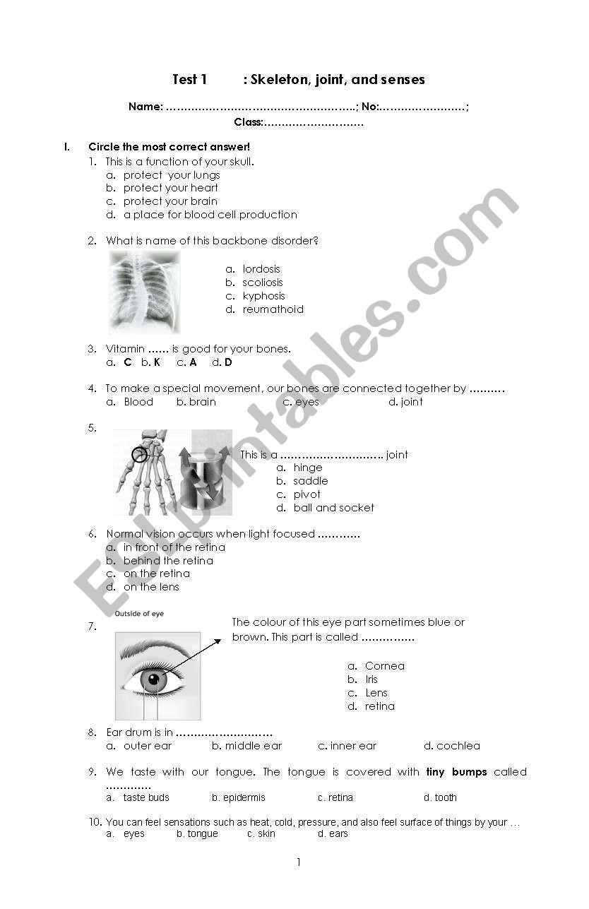 Joints and Movement Worksheet English Worksheets Skeleton Joint Senses