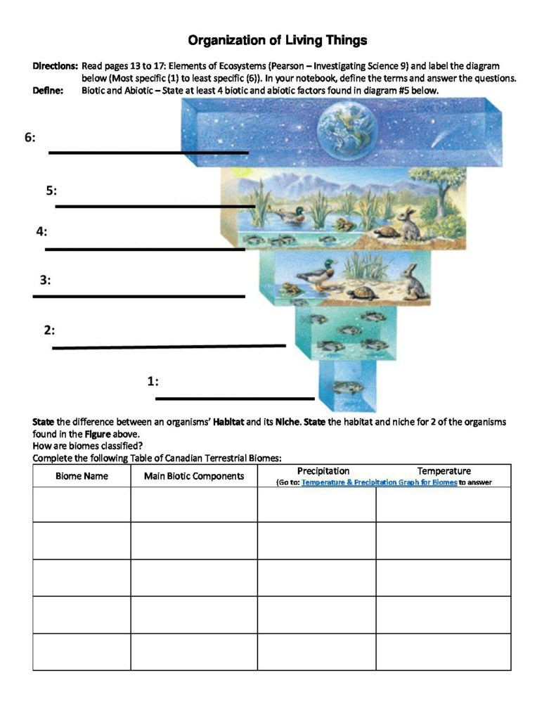Levels Of organization Worksheet organization Of Living Things Worksheet
