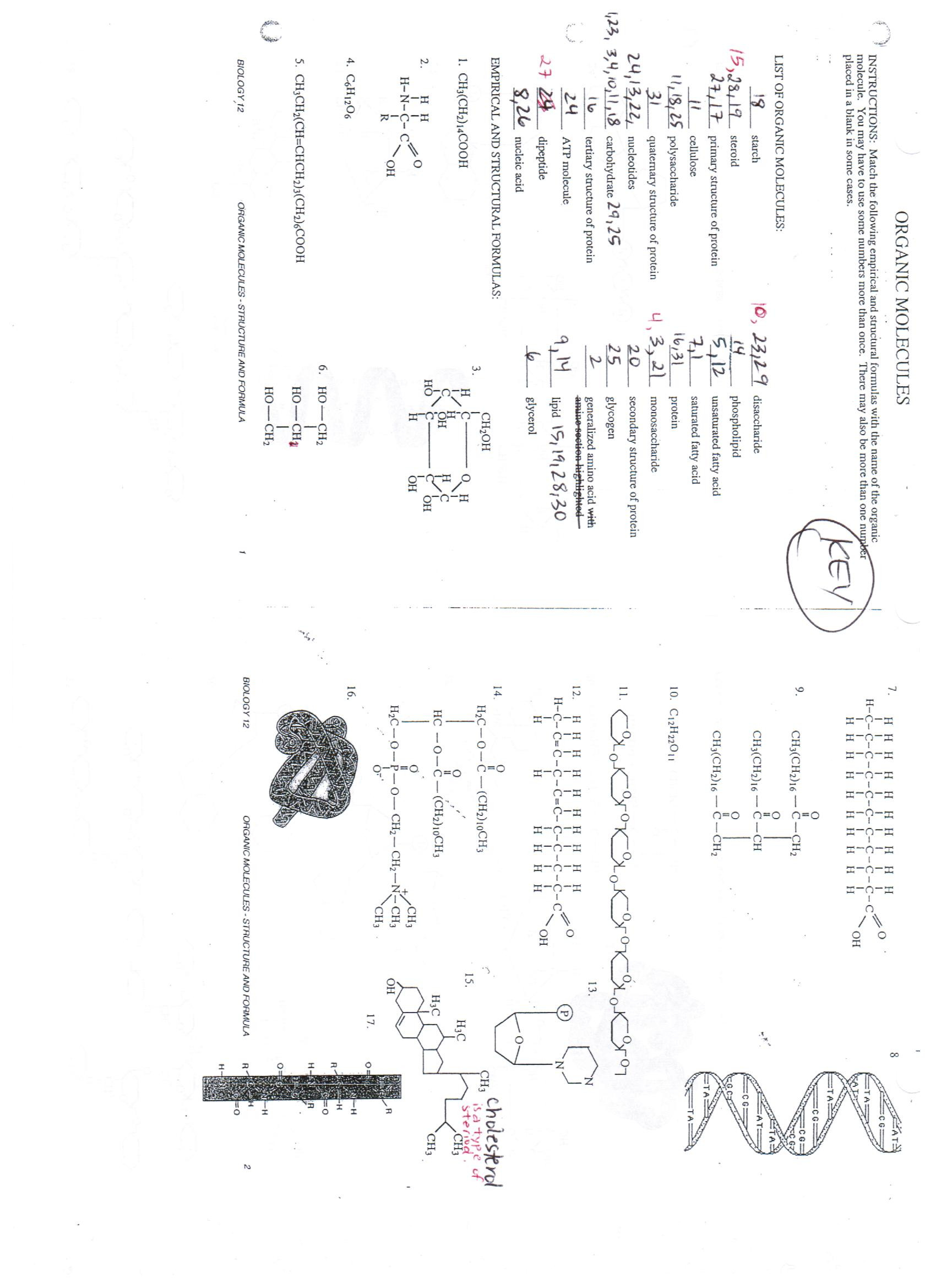 Macromolecules Worksheet 2 Answers Biomolecules Worksheet Answers