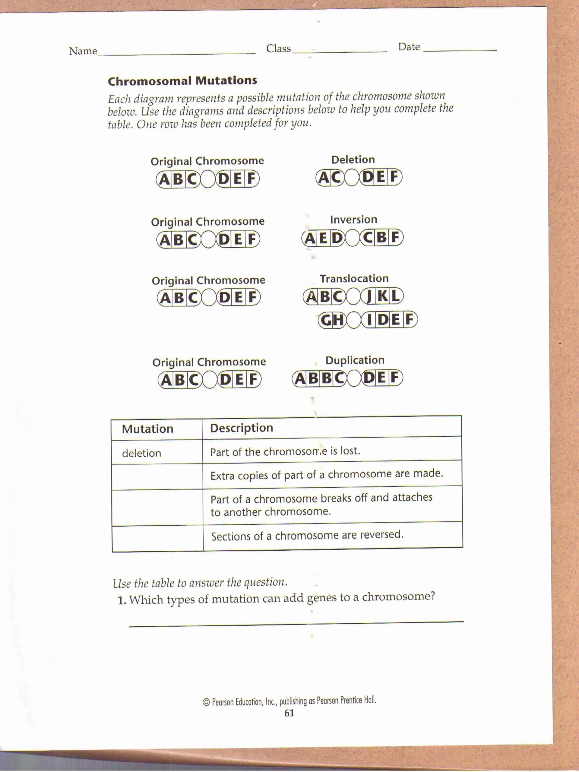 Mutations Worksheet Answer Key Genetic Mutation Worksheet Answer Key Inspirational