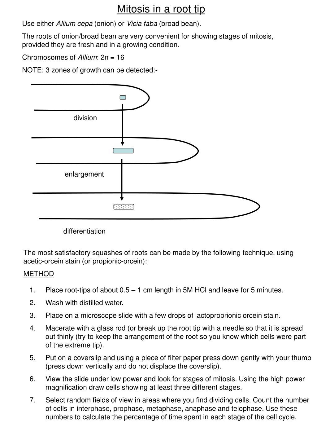 Onion Cell Mitosis Worksheet Answers Ppt Mitosis In A Root Tip Use Either Allium Cepa Onion