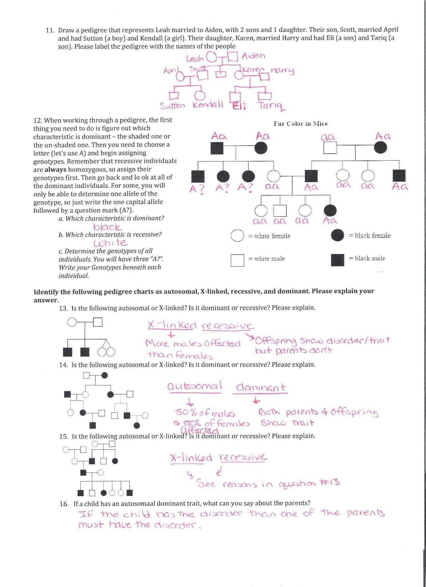 Pedigree Worksheet Answer Key Genetics Pedigree Worksheet Answer Key with Images