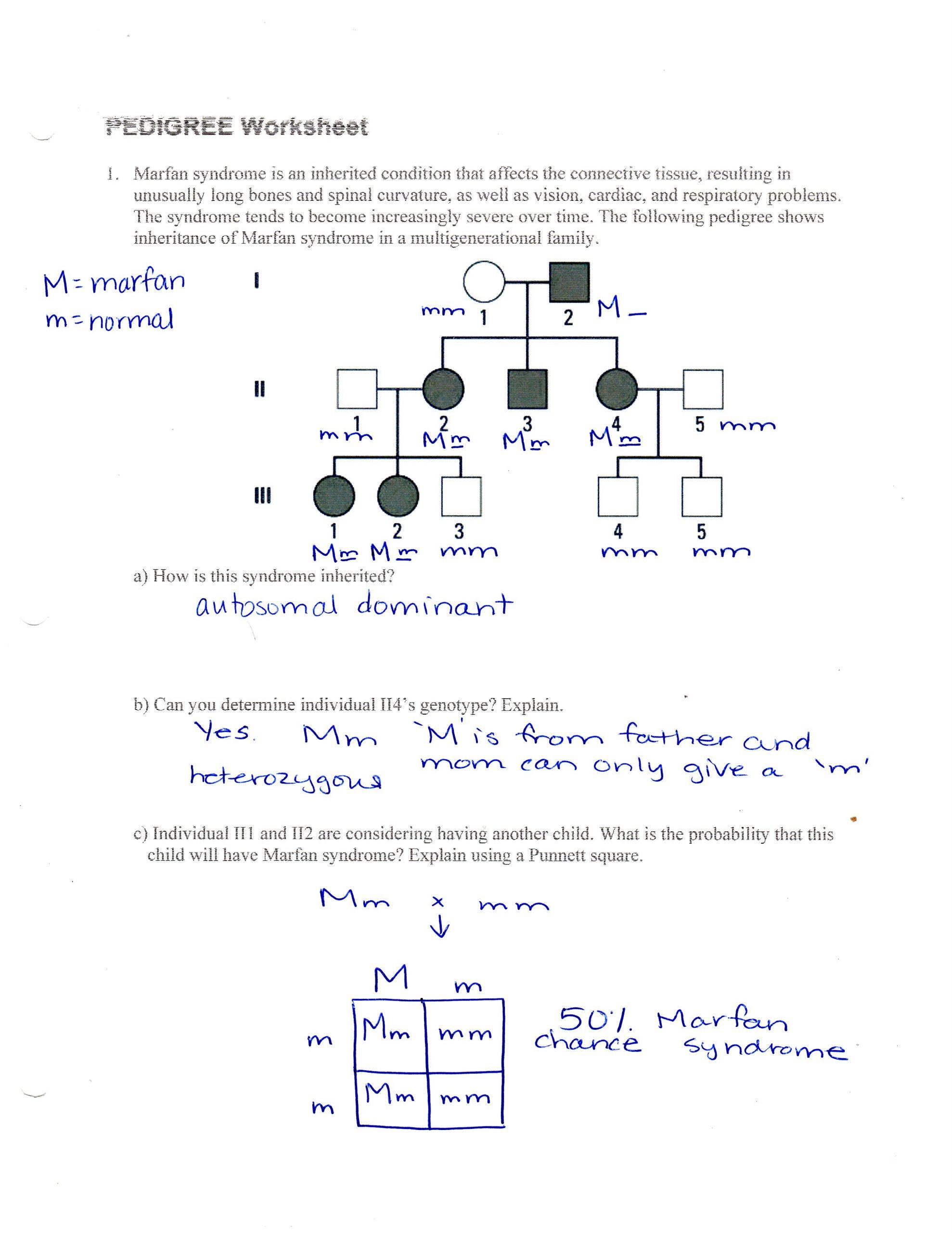 Pedigree Worksheet Answer Key Human Pedigree Worksheet Key