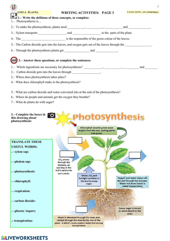 Photosynthesis and Respiration Worksheet Answers Csan5asu4f3 Interactive Worksheet