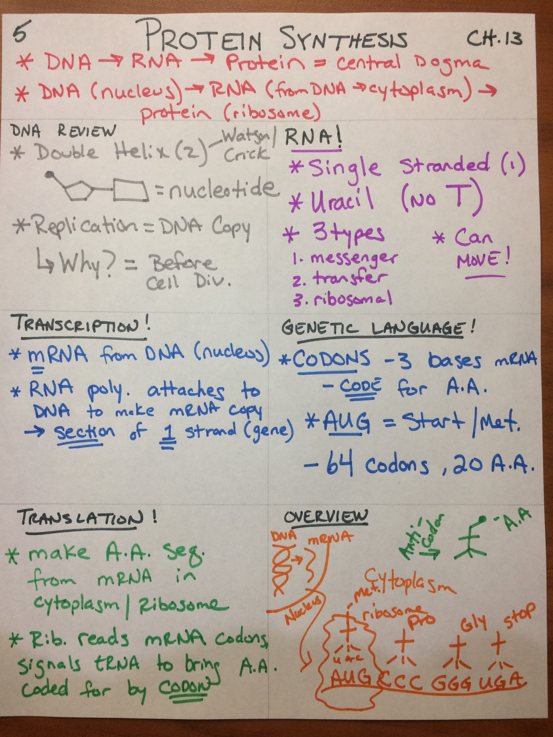Protein Synthesis Review Worksheet Pap Dna and Protein Synthesis Flashes Biology