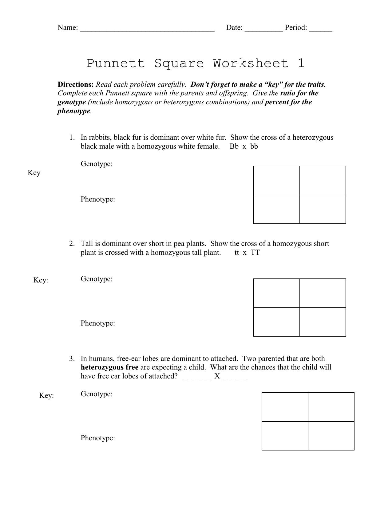 Punnett Square Practice Problems Worksheet Polygenic Punnett Square Worksheet