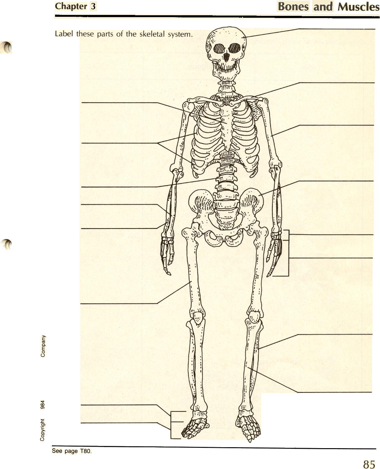 The Skeletal System Worksheet Blank Skeletal System Diagram Human Body Anatomy