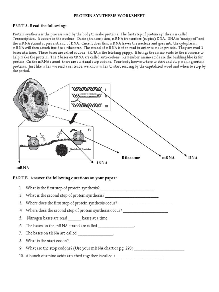 Transcription and Translation Practice Worksheet Protein Synthesis Ws Translation Biology