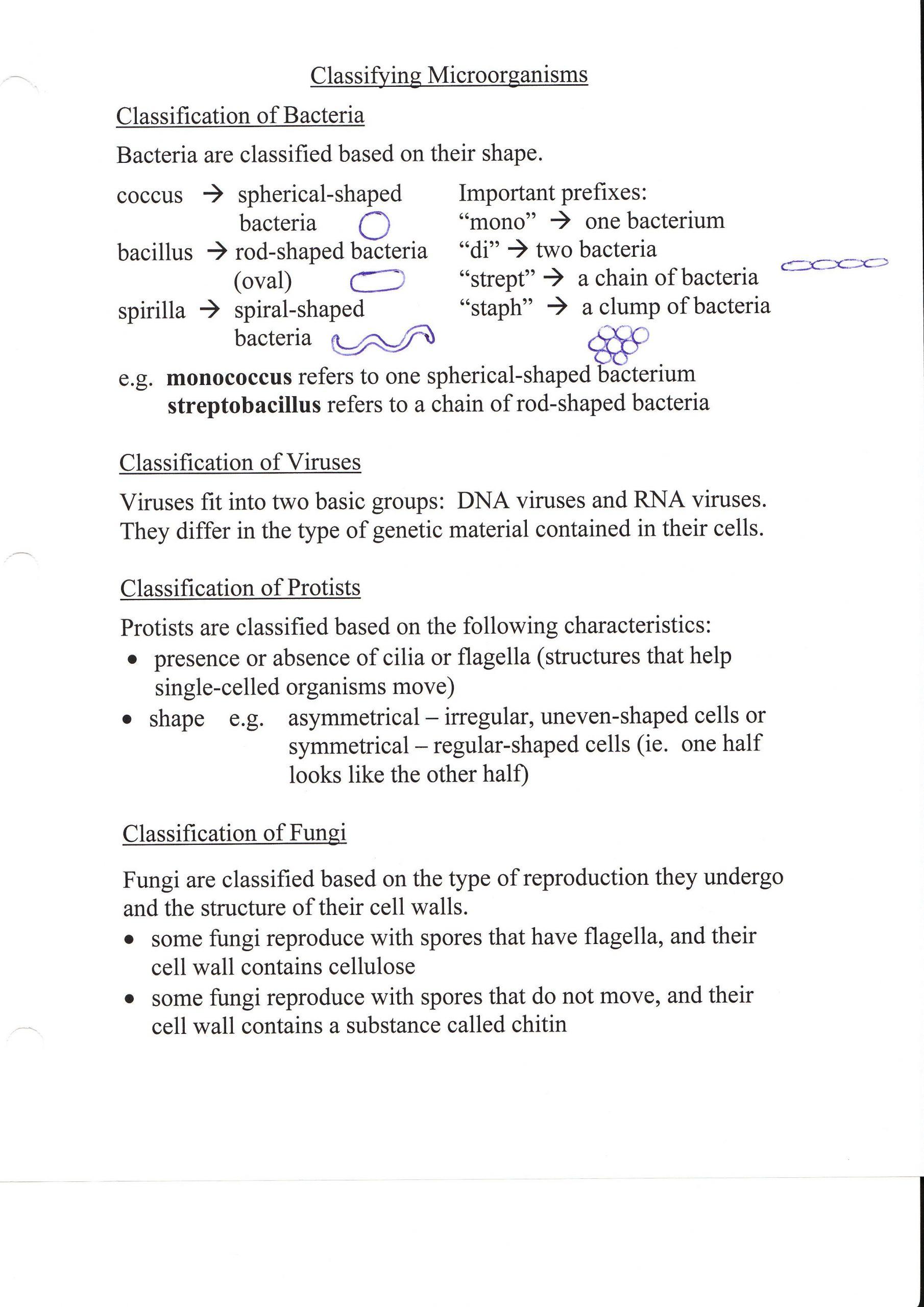 Virus and Bacteria Worksheet 31 Chapter 18 Viruses and Bacteria Worksheet Answer Key