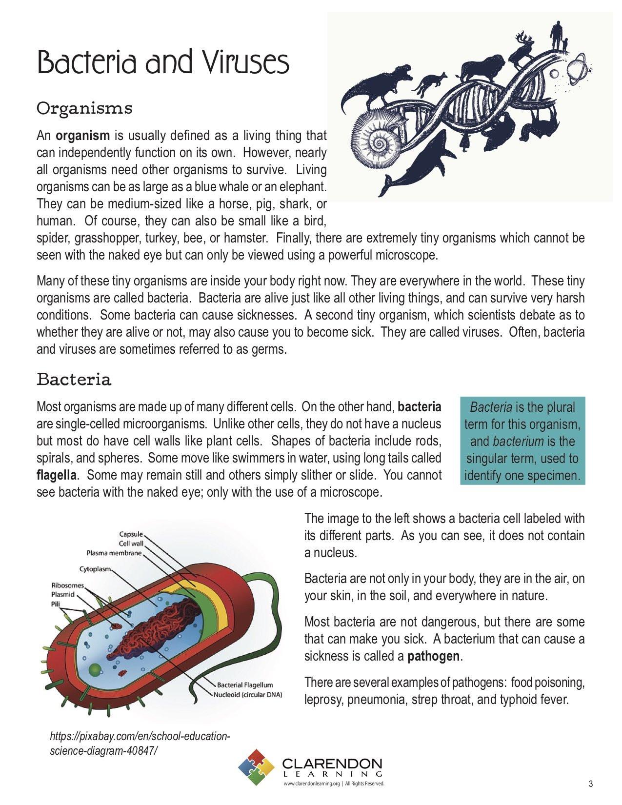 Virus and Bacteria Worksheet Bacteria and Viruses