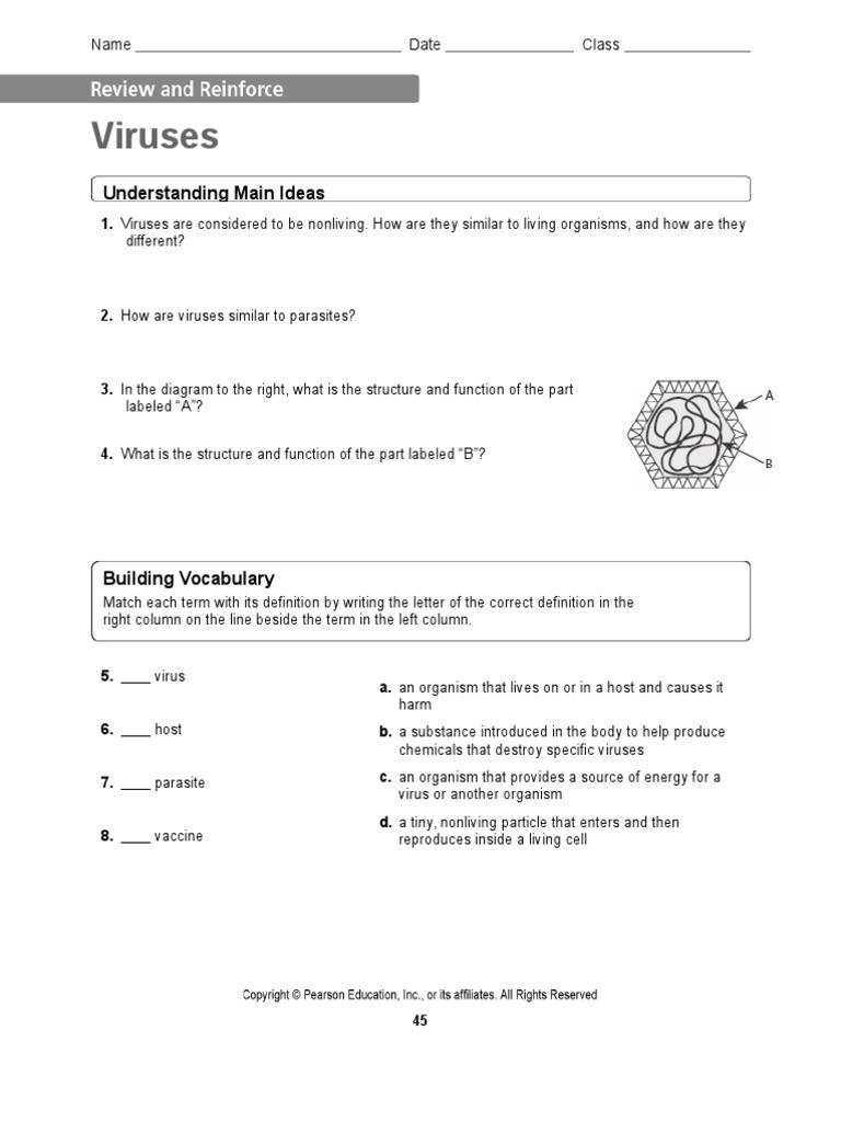 Virus and Bacteria Worksheet Viruses and Bacteria Worksheet Bacteria